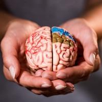 สมองแข็งแรงชีวิตมีความสุข